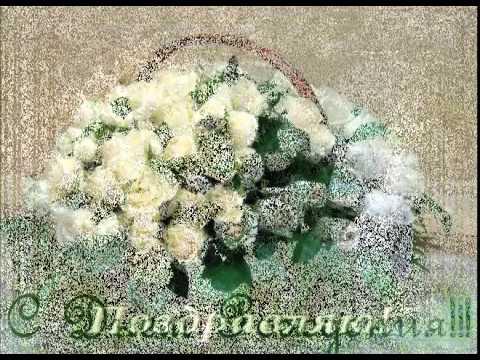 С Днем рождения  Белые  розы