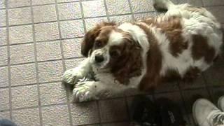 動物病院に、置き去りにされていた犬を家で飼うことにしました。