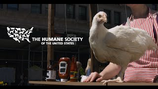 Free chicken in NYC!