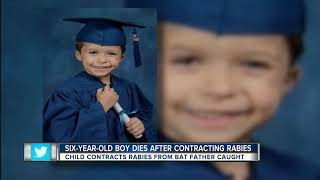 6-year-old Florida boy dies of rabies after being scratched by bat