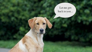 How to Deal With Misbehavior and Stubborn Dogs