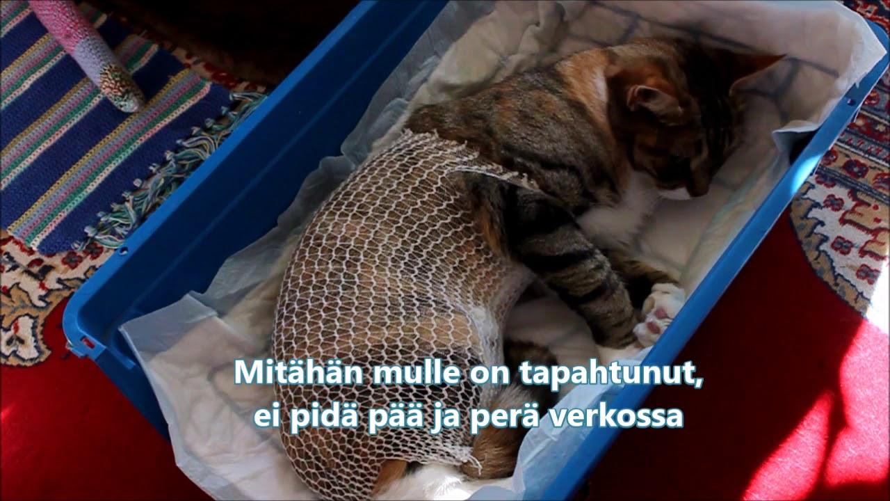Kissan Sterilointi