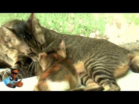 The Cat - Jakarta 2012 (Disco Remix)