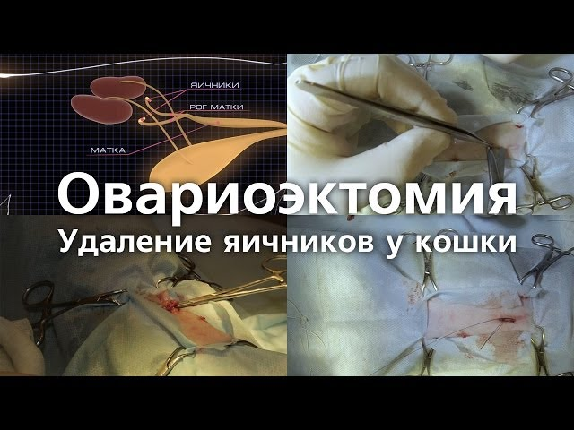 овариопексия