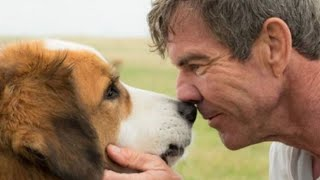 A Dog's Journey Movie Review (A Dog's Purpose 2)
