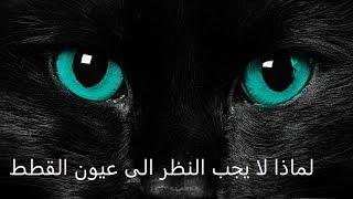 لماذا لا يجب النظر الى عيون القطط