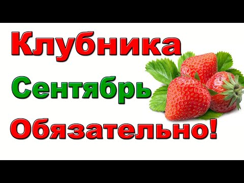 Вопрос: Клубника, что за ягода?