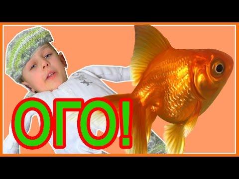 Bad Baby Вредные Детки Сказка Золотая Рыбка