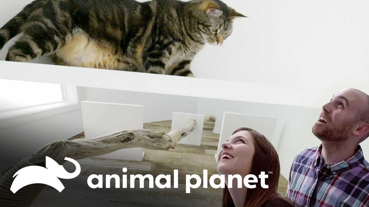 Paredes com degraus para gatos | Um Lar para Pets | Animal Planet Brasil