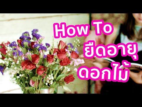 How to ยืดอายุดอกไม้ในแจกันให้อยู่นานขึ้น | รู้หรือไม่ - DYK - วันที่ 29 Aug 2018