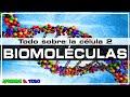 Las biomoléculas - glúcidos, lípidos, proteínas y ácidos nucleicos |Todo sobre la Célula 2| Biología