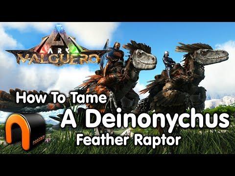 ARK How To Tame A Deinonychus Feathered Raptor (NEW Valguero Dino