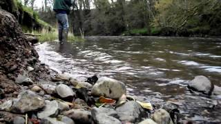 Brown Trout catch and release on the Six-Mile Water