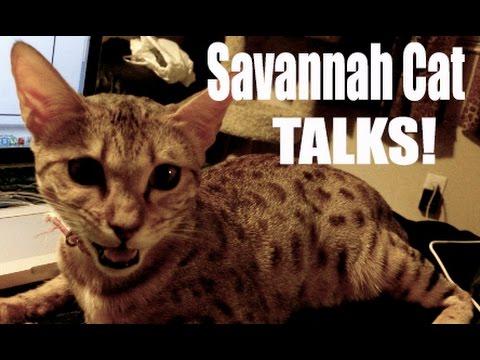 TALKING CAT!!