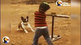 Corgi Plays Baseball With Kid Brother | The Dodo