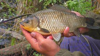 Рыбалка на диком лесном озере My fishing