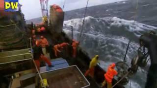 Aşırı balıkçılık