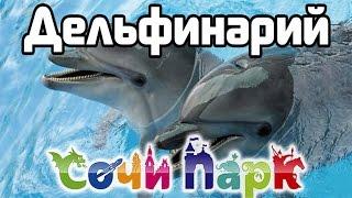 Дельфинарий Сочи Парк Адлер Дельфины Нерпа Шоу
