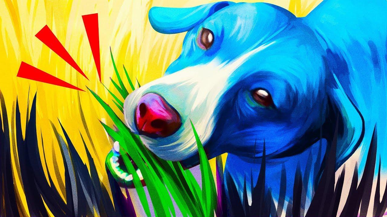 Warum Hunde Gras fressen und 33 Fakten über das Fallenlassen von Klauen + video
