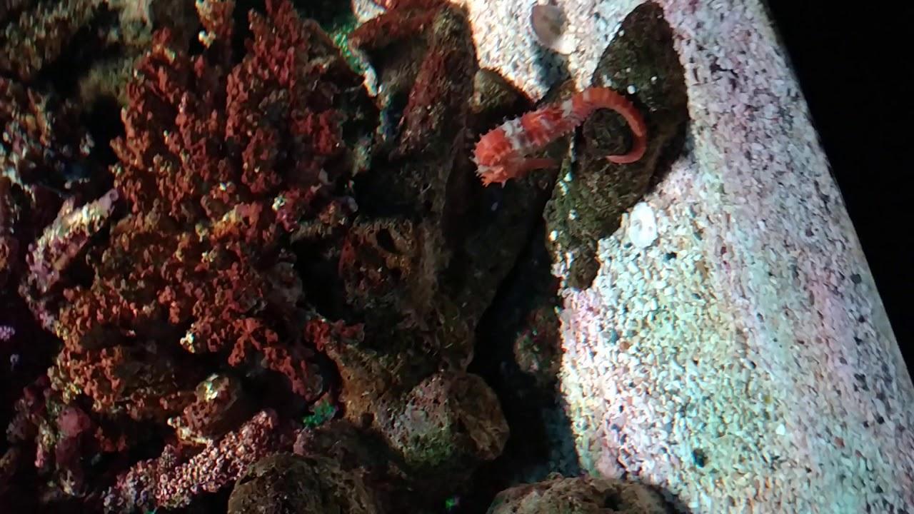 Sea Life Bangkok Ocean World 23 February 2020 9 Three Spot Sea Hourse