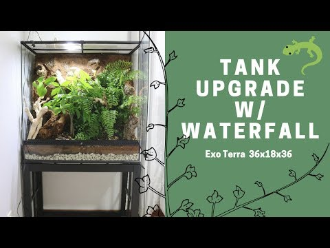 Crested Gecko Vivarium Upgrade || Exo Terra 36x18x36 || Sydney Harvath
