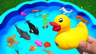 Learn Colors with Wild Animals Toys Sharks in Blue Water Tub Toys For Kids