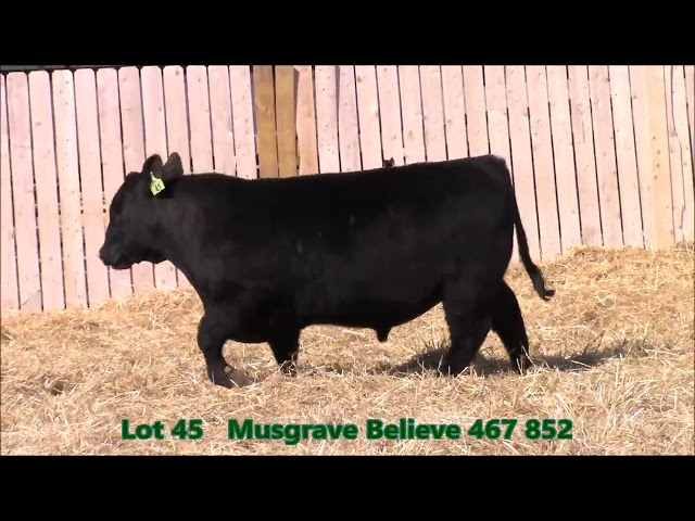 Musgrave Angus Lot 45