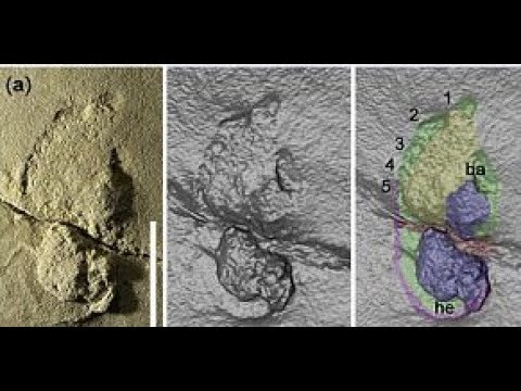 The mystery trail of 5.7M year old fossilised footprints could shake up human evolution
