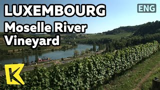 【K】Luxembourg Travel[룩셈부르크 여행]모젤 강변의 포도밭/Moselle River/Vineyard/Cruise/Wine