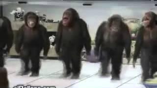 Обезьяны танцуют
