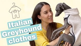 Do Italian Greyhounds Really Need CLOTHES? Everything you need to know!