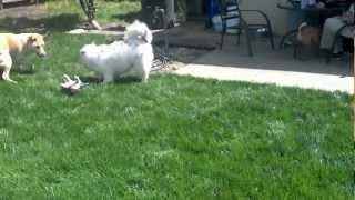 Puppy Play Date .........sooo Cute