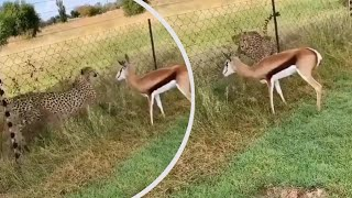 🐺 Top Viral Animal Videos 2020 🐼 Best Animal Compilation #7 🐨 Funny Animal Videos 🐶: August 2020