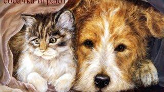 Смешное видео про животных. Кошка играет с собакой)