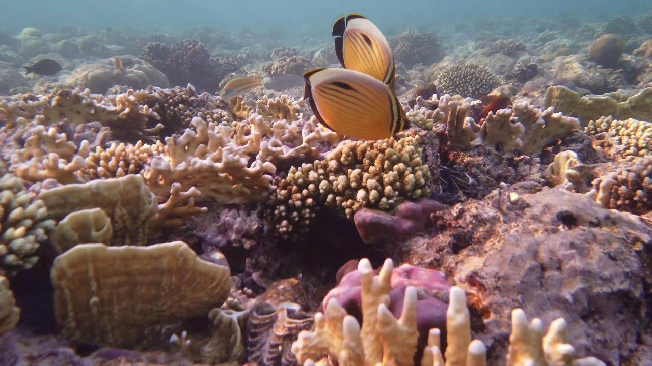 Sharm el Sheikh, L'Acquario di Allah!