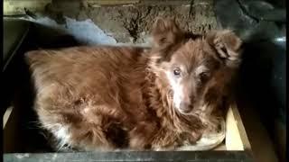 Симона - собака, которую предали