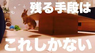 先に寝たお母さんの気を引く為にとったウサギの行動 #888