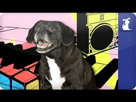 Doglopedia - Puggle