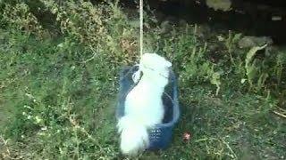 Сделай сам - лифт для кота (Do it yourself - elevator for cat)