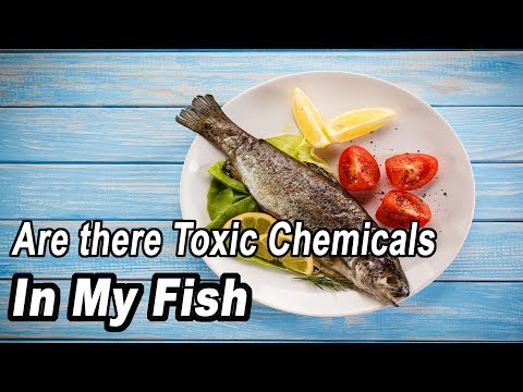 Are There Toxic Chemicals In The Fish I Am Eating? By Judith Weis