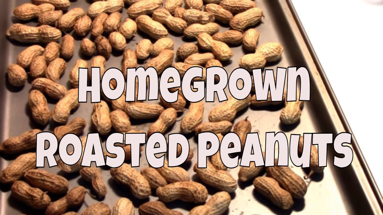 3 Ways to Dry Peanuts recommend