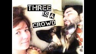 Vlog | Raising a German Shepherd...Apartment Style || Rebecca Romero
