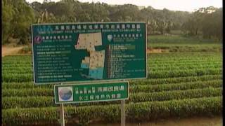 A Brief Introduction of Tea of Taiwan