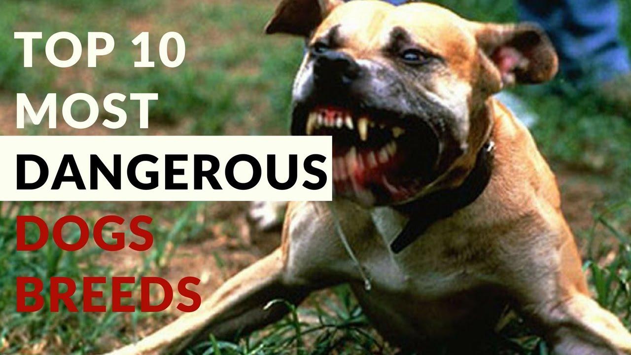 Top 10 Most Dangerous ...