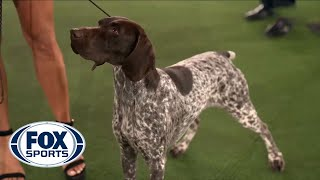 Jade, the German Shorthaired Pointer, wins the Sporting Group | FOX SPORTS