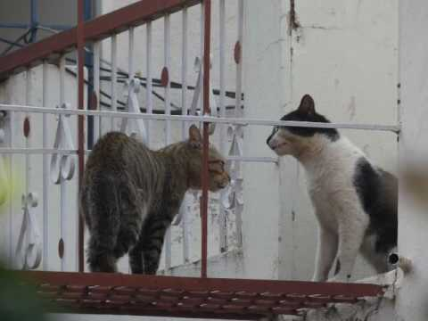 Alley Cats Fighting - Part 3