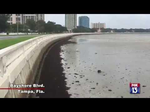 Hurricane Irma drains Tampa Bay area waterways