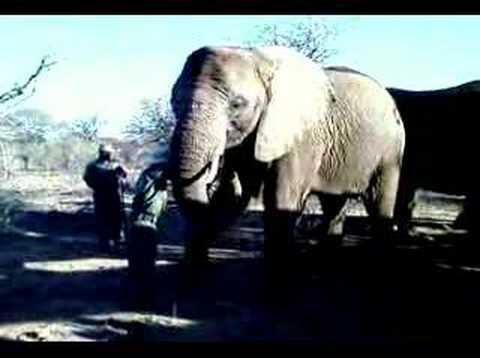 Elephants of Mokolodi Nature Reserve