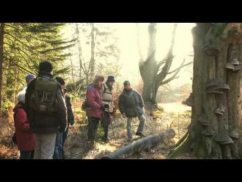 IVN  Vijlen - Vaals: Natuurwandeling in de Hoge Venen / Hohes Venn