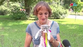 В Комсомольском саду Волгограда даром отдавали кошек и собак